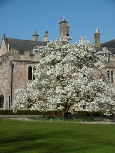 Wellls_Bishops_Palace_Blossom