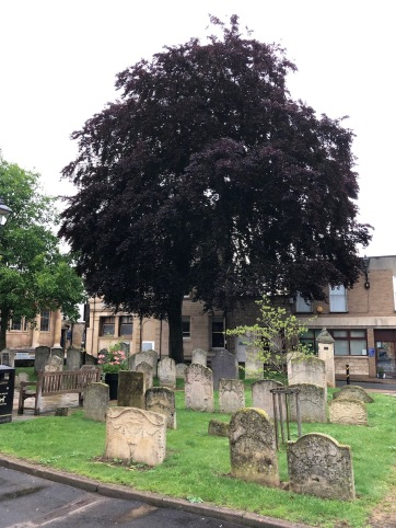 Stamford_StMichaels-tombstone-tree